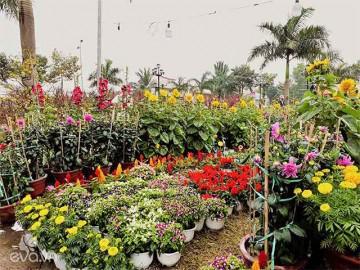 Rực rỡ sắc xuân trong không gian chợ hoa Đà Nẵng 2018