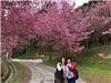 Rừng đào Đài Loan đẹp ngất ngây như lạc vào truyện tranh