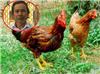 Kinh hoàng anh trai dùng búa đánh em trai và hàng xóm tử vong vì hai con gà thiếu cân