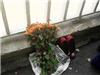 Cô gái để lại bó hoa hồng và đôi giày ở giữa cầu Thăng Long rồi nhảy xuống tự tử