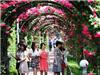 Náo nức tham gia lễ hội hoa hồng Bulgaria lớn nhất Việt Nam