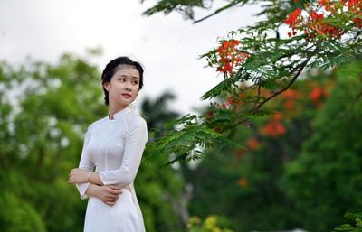 Nữ sinh Kinh tế mộng mơ bên phượng hồng rực đỏ